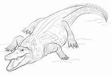 kostenlose malvorlagen krokodil krokodile zum ausmalen ausmalbilder krokodile bilder