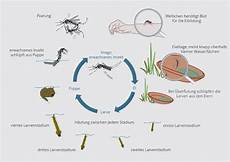 dengue fieber gesundheits gefahr durch dengue fieber nimmt st 228 ndig zu thailand aktuell