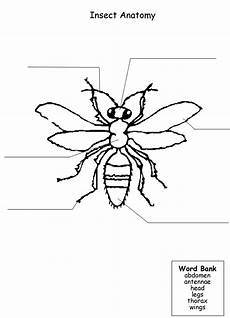 grade 3 science worksheets insects 12532 science worksheets insects insects preschool science worksheets