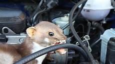 Marder Im Auto - wie h 228 lt marder vom auto fern ndr de ratgeber