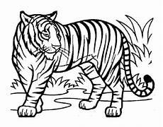 tiger malvorlagen kostenlos zum ausdrucken ausmalbilder