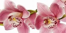 immagini fiori orchidee fiori giardino balcone e terrazzo green