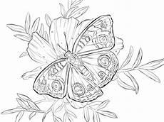 Ausmalbild Schmetterling Pfauenauge Ausmalbild Nordamerikanisches Pfauenauge Auf Einer Blume