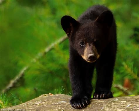 Have You Ever Talked To A Black Bear?