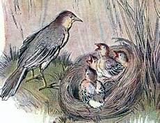 Amar Lubai Quot Kajian Burung Quot Burung Pipit Dan Anaknya