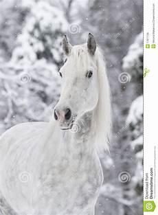 Ausmalbilder Pferde Im Winter Wei 223 Es Pferd Im Winter Lizenzfreie Stockbilder Bild