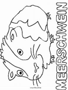 Meerschweinchen Ausmalbilder Malvorlagen Komputer Ando Meerschweinchen Zum Ausmalen
