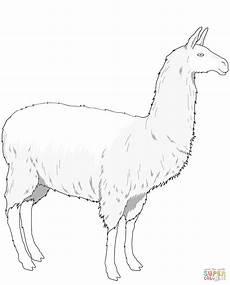 Malvorlagen Kostenlos Lama Ausmalbild Einfaches Lama Ausmalbilder Kostenlos Zum