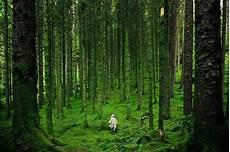 Hutan Indonesia Simpan Potensi Energi Masa Depan
