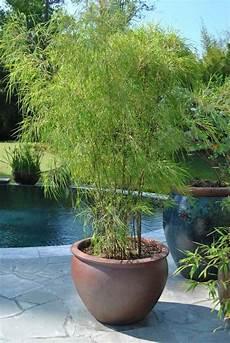 bambou en pot brise vue naturel et d 233 co sur la terrasse