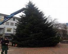 weihnachtsb 228 ume holstein weihnachtsbaum lieferservice