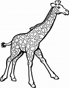 giraffe coloring pages clipart panda free clipart images