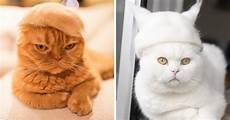 cat hair cats in hats made from their own hair bored panda