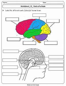 human brain labeling diagram identify parts and their functions worksheets
