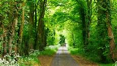 Nature Path 4k Wallpaper by Wallpaper 3840x2160 Forest Path Park Summer
