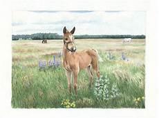 das fohlen fohlen pferde wiese aquarell moncha