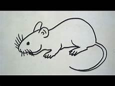 Cara Menggambar Tikus How To Draw A Mouse