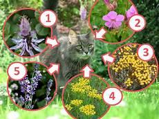 Rośliny Odstraszające Koty W Ogrodzie