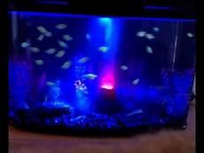 blacklight fish tank w glofish youtube