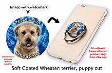 soft coated wheaten terrier haircut photos diesel soft soft coated wheaten products