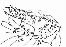 Malvorlagen Frosch Kostenlos Frogs Coloring Pages To And Print For Free