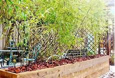 grande jardinière pour bambou comment planter des bambous en jardini 232 re pivoine etc