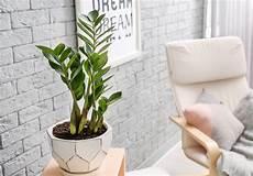zimmerpflanzen für dunkle räume schattenliebende zimmerpflanzen unsere top 10 plantura