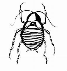 Insekten Malvorlagen Tiere Insekten 00257 Gratis Malvorlage In Insekten Tiere Ausmalen