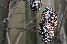 vogelfutter selber machen tannenzapfen vogelfutter selber machen vogelfutter zapfen diy