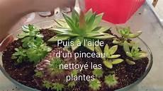 plante grasse plante grasse terrarium plante grasse succulente