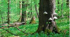 ein urwald mitten in deutschland der nationalpark hainich