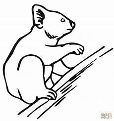 Malvorlagen Zum Ausdrucken Wombat Ausmalbild Ein Koala Klettert Den Baum Hinauf