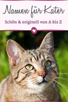 kindersitz bis zu welcher größe m 228 nnliche katzennamen a bis z f 252 r ihren kater katzen namen katzennamen und katzen