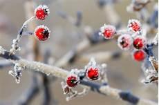 wie pflanzen den winter 252 berleben nabu mecklenburg