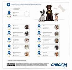 Beliebteste Hunderassen 2018 Labrador Auf Platz Eins