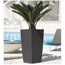 pot pour palmier exterieur r 233 sultat de recherche d images pour quot plante palmier