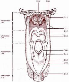 Pharynx Seer