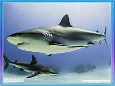 Gambar 100 Gambar Ikan Segala Jenis Kartun Hias Air Laut