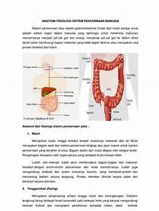 Anatomi Fisiologi Sistem Pencernaan Manusia Dan Masalah