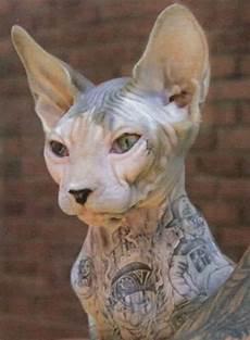 inadmissible la mode des tatouages sur les animaux de