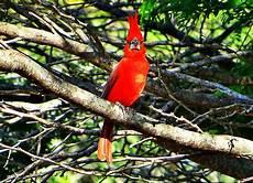 ave tipica del estado bolivar s 237 mbolos naturales del estado cojedes