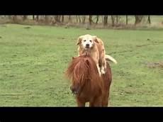 mit hund hund rider p 229 pony rides a pony in denmark