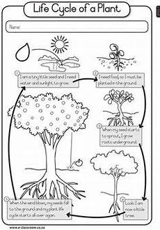 simple worksheet for parts of a seed 2nd grade science pinterest worksheets plants and school