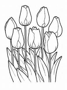 Ausmalbilder Blumen Tulpen Ausmalbilder Tulpen 8 Kostenlos Ausdrucken