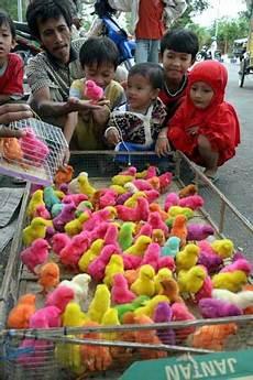 Pondok Kita Cerpen Anak Ayam Warna Warni Milikku