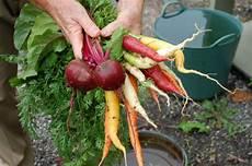 your garden 4 tips to prepare soil for your garden toronto