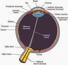 Anatomi Mata Bagian Bagian Mata Manusia Dan Fungsinya Yang