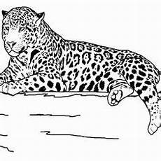 gro 223 er jaguar ausmalbild ausmalbilder ausmalen
