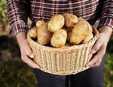 kartoffeln stecken so geht s