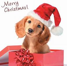 details about quality christmas cards cute comedy santa dogs puppies 26 different designs